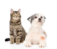 katthund tillsammans bakgrund isolerad white Royaltyfri Bild