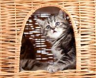 katthus inom skämtsam sitting för kattunge Arkivfoton