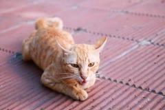 Katthusdjur Fotografering för Bildbyråer