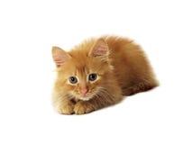 kattingefära little Arkivbilder