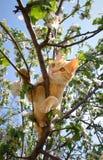 kattingefärabarn Arkivfoton