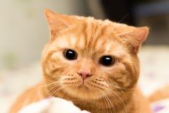 Kattjägare Royaltyfri Bild