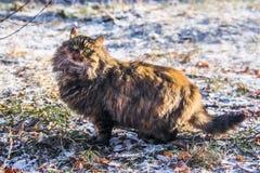 Kattjakter Royaltyfri Fotografi