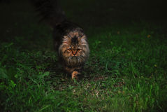 Kattjakter i trädgården arkivfoto