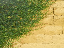 Kattjordluckrare på en gul vägg Royaltyfria Foton