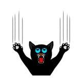 Kattjordluckrare skrapar en bakgrund Arkivbild