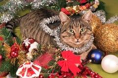 kattjul Fotografering för Bildbyråer