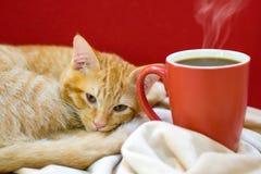 Kattkafé, en katt med en kopp kaffe Royaltyfria Bilder