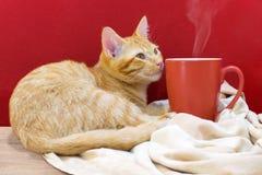 Kattkafé, en katt med en kopp kaffe Arkivbilder