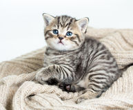 Kattkattunge som ligger på ärmlös tröja Arkivfoton