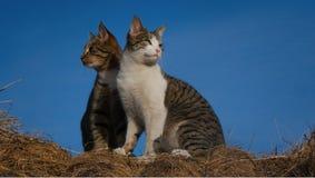Kattkompisar som ut ser på världen royaltyfri fotografi