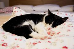 Kattlögnerna arkivfoto