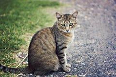kattlantgård Fotografering för Bildbyråer