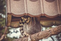 Kattmaki på zoo royaltyfri foto