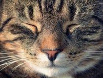 Kattmakrostående Arkivfoton