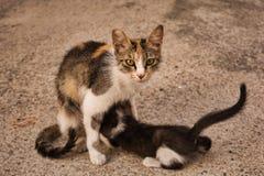 Kattmamman med hennes behandla som ett barn kattungen royaltyfria bilder