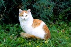 kattmodell arkivbild