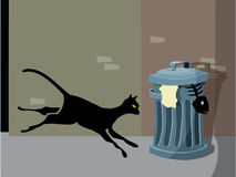 kattnatt Arkivfoton