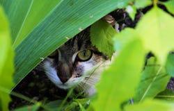 Kattnederlag i blommorna! Arkivbild