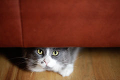 Kattnederlag under soffan Arkivbild