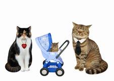 Kattpar och deras kattunge royaltyfria bilder