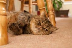 kattperser fotografering för bildbyråer