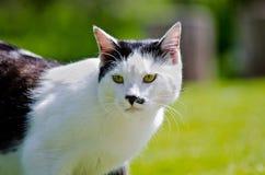 Kattportrai Arkivbild