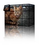 kattpussel arkivfoto