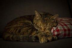 Kattsömn på en kudde Royaltyfri Fotografi