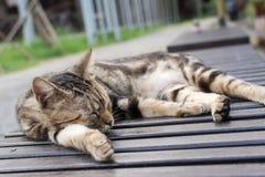 Kattsömn på en stol Arkivfoton