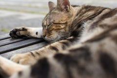 Kattsömn på en stol Royaltyfria Bilder