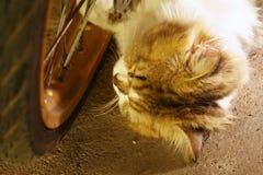 Kattsömn på golvet Royaltyfri Fotografi