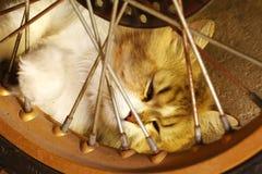 Kattsömn på golvet Fotografering för Bildbyråer
