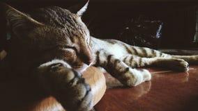 Kattsömn på golvet Royaltyfri Bild