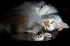 kattsömn till att försöka Arkivfoton