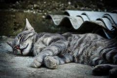 Kattsömnar Arkivbilder