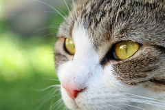 Katts ögon Arkivbilder