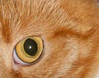 Katts närbild för öga Arkivfoton