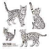 Kattsamling - vektorkontur också vektor för coreldrawillustration Fotografering för Bildbyråer