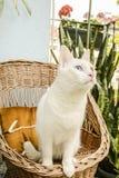 Kattsammanträde i den vide- stolen Fotografering för Bildbyråer