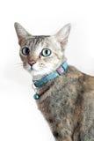 Kattsammanträde och se kameran som isoleras på vit Arkivfoto