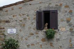 Kattsammanträde på en fönsteravsats i Vinci arkivbild