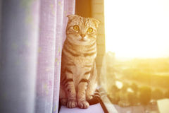 kattsammanträde på ett fönster med solljusbakgrund Fotografering för Bildbyråer