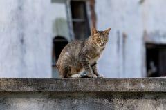 Kattsammanträde på ett staket royaltyfri bild