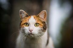 Kattsammanträde på ett staket Royaltyfri Fotografi