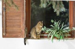 Kattsammanträde på fönster Royaltyfri Foto