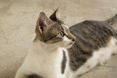 Kattsammanträde på golvet Arkivfoton