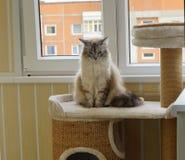 Kattsammanträde på katthylla på balkongen anhydrous arkivfoton