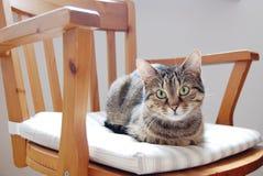 Kattsammanträde på stolen royaltyfri bild