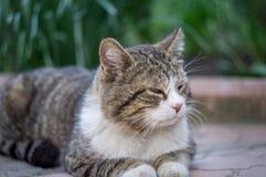 Kattsammanträde på tegelplattan Royaltyfria Foton